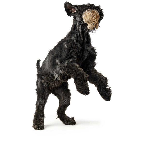 Hunter Pori kutya
