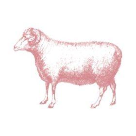 Bárány, ló