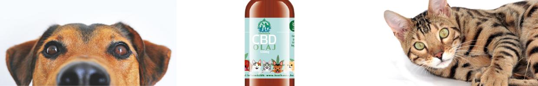 CBD olaj kutyáknak és macskáknak